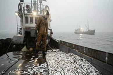 КНР и Корея захватили рыболовный флот и квоты на Дальнем Востоке РФ